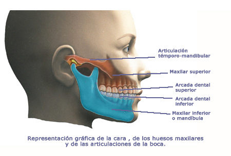 Test de la articulación témporo mandibular Blog sobre kinesiología