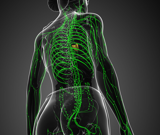 Puntos reflejos neuro-linfáticos en Kinesiología Blog sobre kinesiología