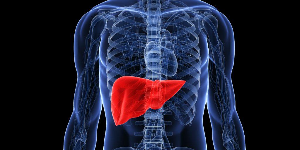 el cardo mariano en la detoxificación del hígado