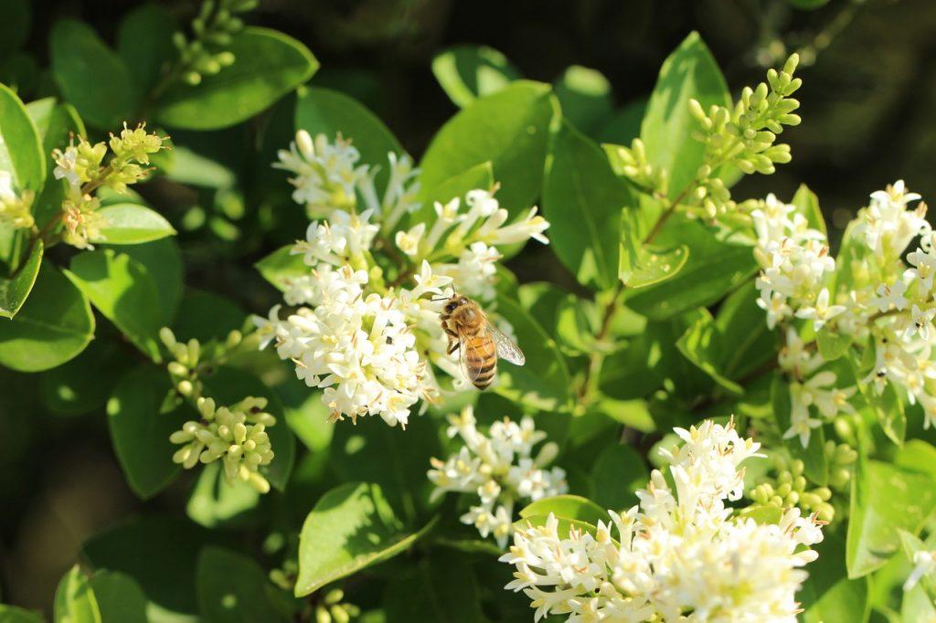 propóleo de abeja