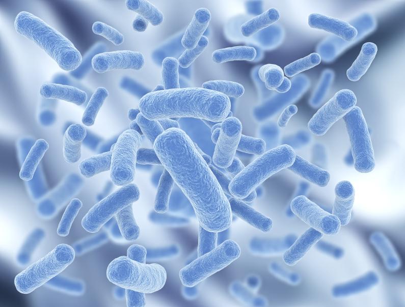 probióticos, flora intestinal