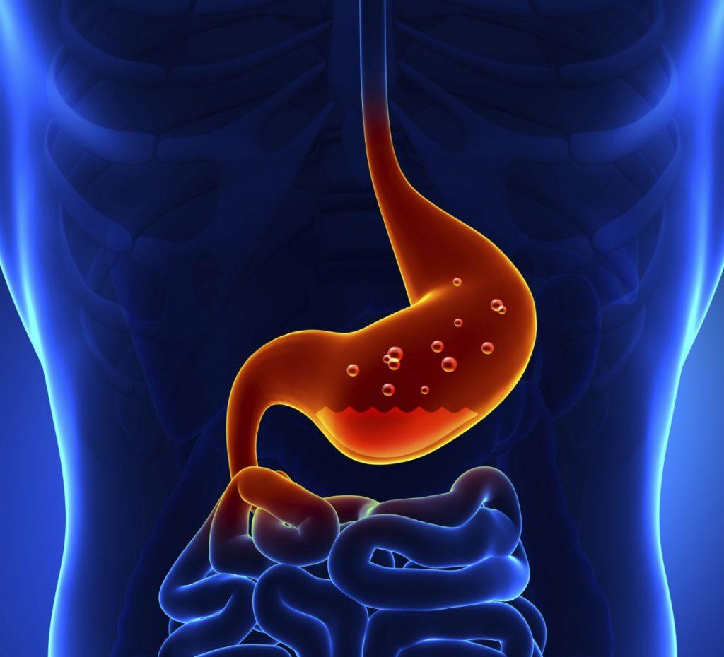 mucosa gastrica, estómago