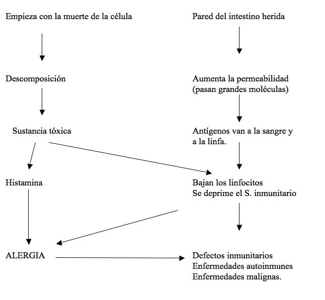 cadena patológica de la alergia