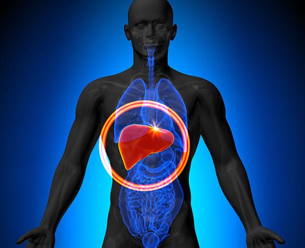 Perché il fegato è l'organo della felicità?