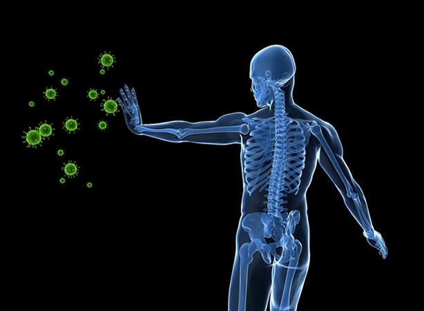 Le système immunitaire et la kinésiologie