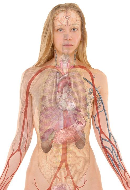 Rapport entre le système nerveux entérique et le tractus intestinal
