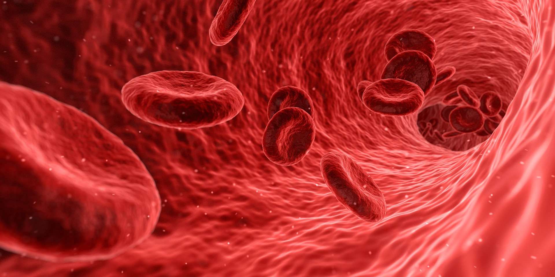 anticorpos, sistema imunológico.