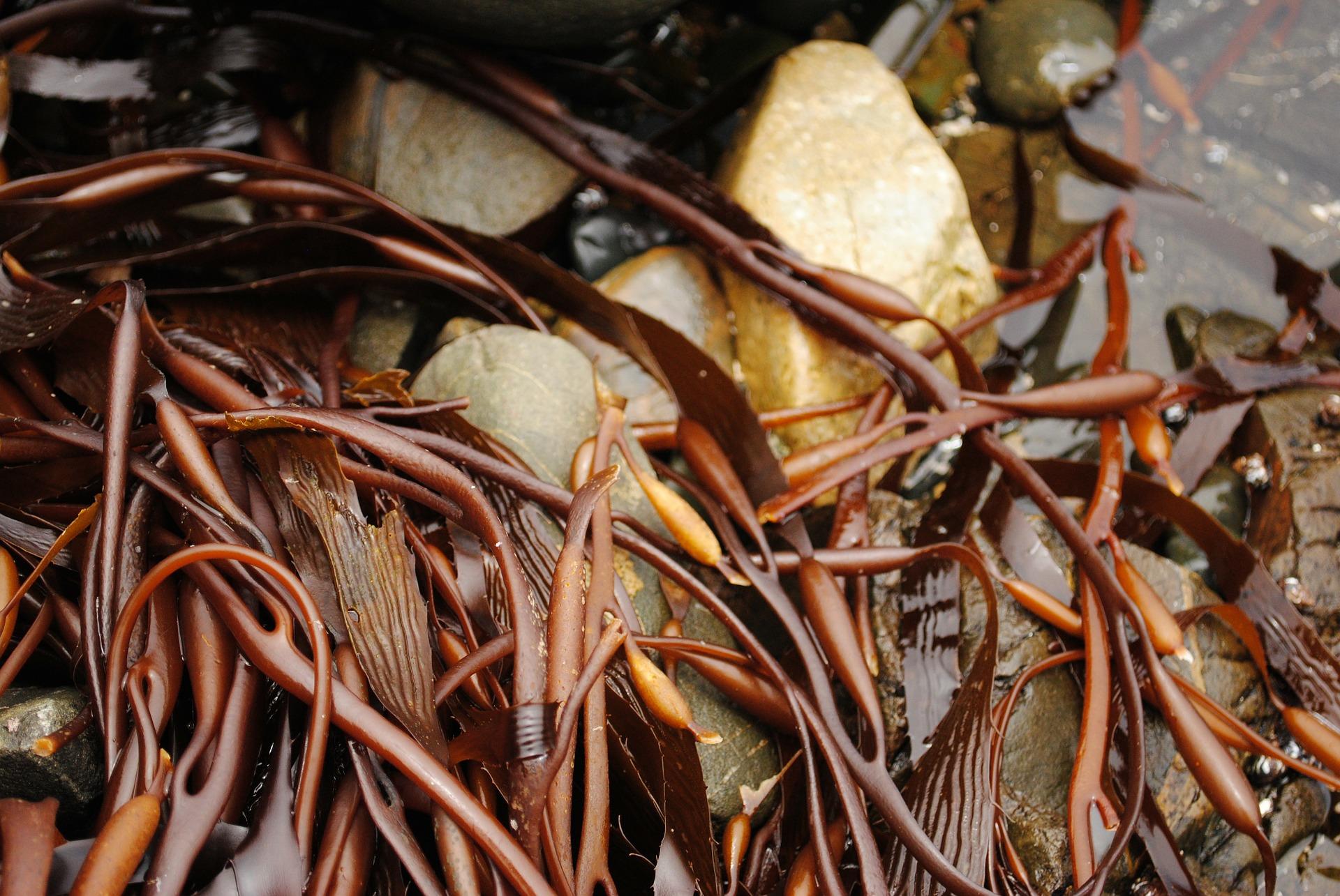 As algas são o seu melhor aliado contra as deficiências nutricionais