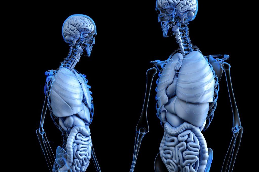 Tecidos corporais