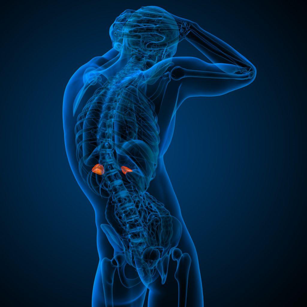 sintomas da fadiga adrenal